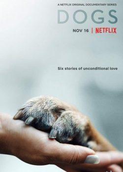 Những Chú Chó (Phần 1) – Dogs (Season 1)