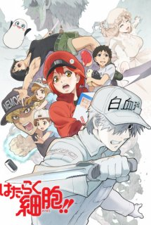 Hataraku Saibou!! - Cells at Work!!, Cells at Work! 2nd Season, Hataraku Saibou 2nd Season
